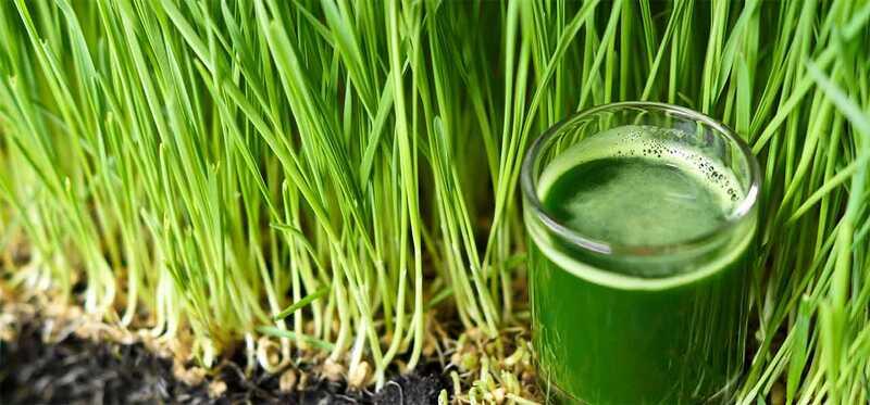 5 parimaid Wheatgrass Juicei naha, juuste ja tervise eeliseid