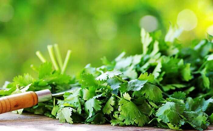 10 Farlige bivirkninger af cilantro