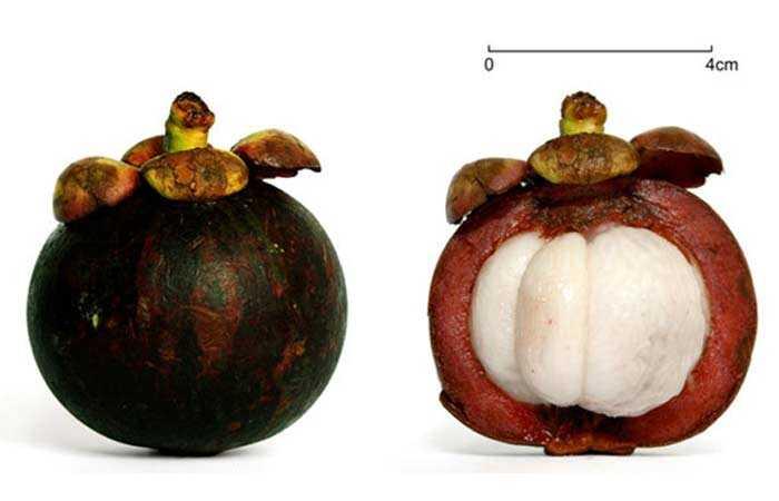 10 Nebezpečné vedľajšie účinky mangosténu