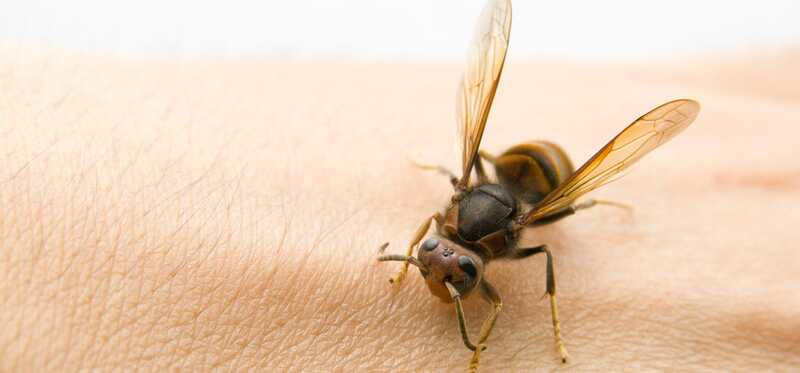 10 účinných domácich prostriedkov pre Bug Bites