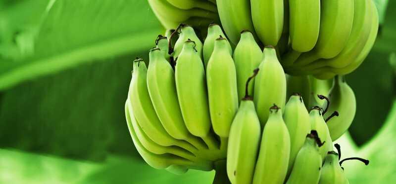 8 úžasných výhod a využitia zelených banánov