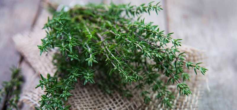 58 úžasné výhody a využitie tymiánu (Ajwain ke Phool) pre pokožku, vlasy a zdravie