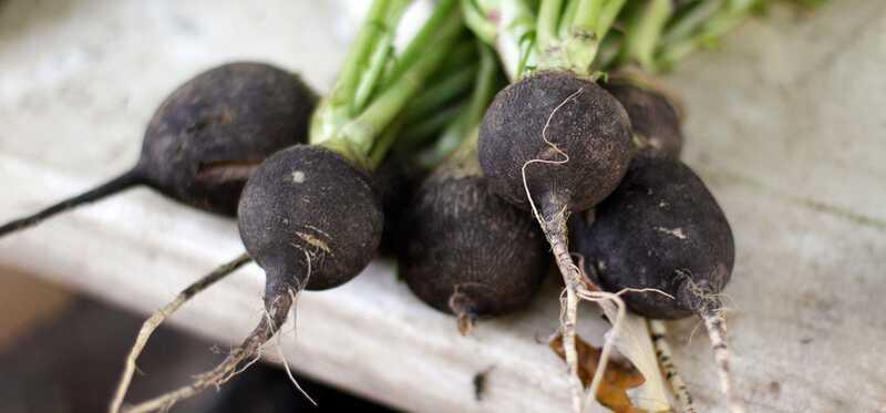 17 geweldige voordelen van Black Radish voor huid, haar en gezondheid