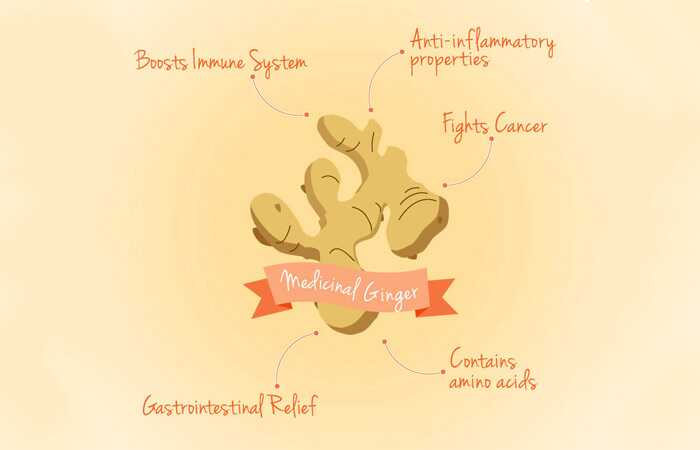 39 beneficios sorprendentes de Ginger (Adrak) para la piel y la salud