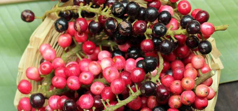 10 prínosov pre zdravie a výživové hodnoty Bignay