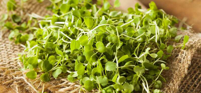 10 úžasné zdravotné prínosy Microgreens