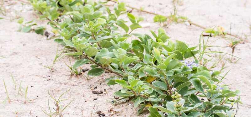 12 úžasných zdravotných výhod spoločnosti Vitex Herb