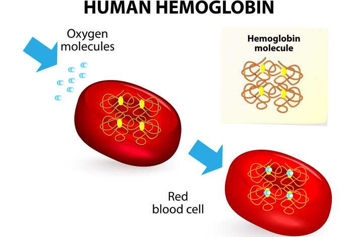27 potravín, ktoré zvyšujú hladinu hemoglobínu