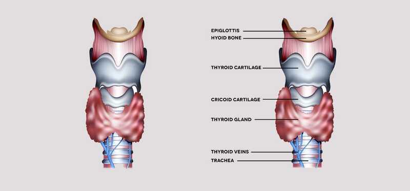 Top 10 účinných domácich liekov na liečbu hypotyreoidizmu