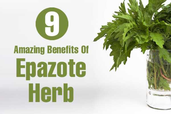 9 geweldige voordelen van Epazote Herb voor huid, haar en gezondheid