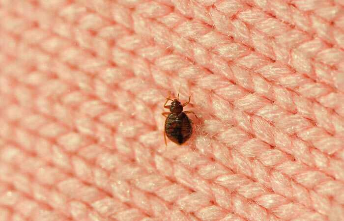 Ako sa rýchlo zbaviť Bed Bugs