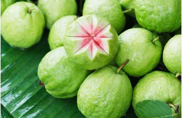 31 úžasné výhody Guava (Amrood) pre pokožku, vlasy a zdravie