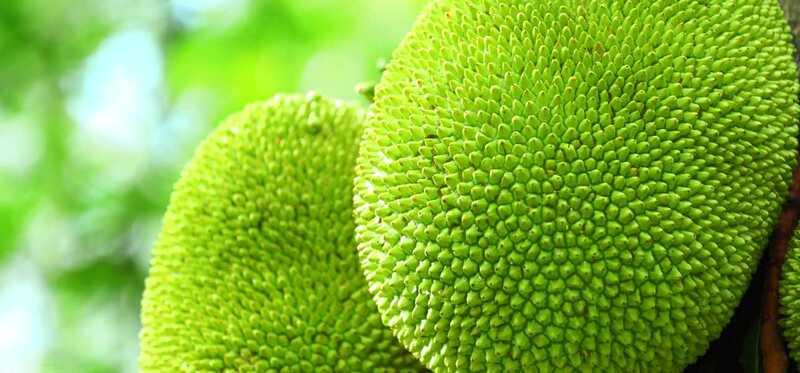 13 úžasných výhod Jackfruit (Kathal)