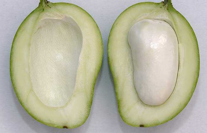 12 geweldige voordelen van Mango Zaden voor huid, haar en gezondheid