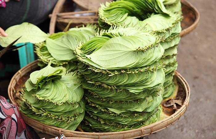 23 úžasné liečivé použitie Betel Leaf (Paan Ka Patta)