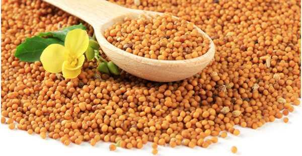 17 úžasných výhod horčičných semien (Rai) pre pokožku, vlasy a zdravie