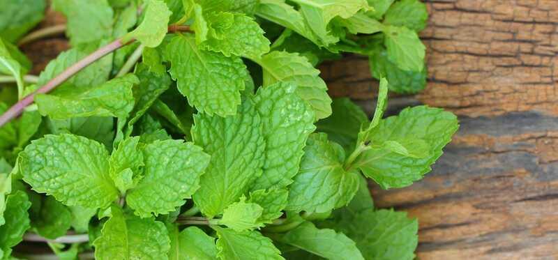 Kan Mint Leaves hjælpe med at kurere acne ar?