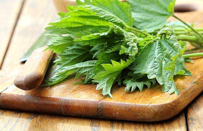 21 úžasné výhody Nettle Leaf pre pokožku, vlasy a zdravie