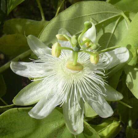 Top 10 najkrajších maškarných kvetov