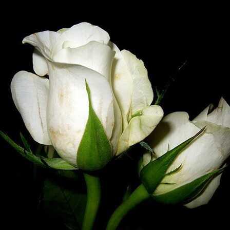 Top 25 najkrajších bielych kvetov