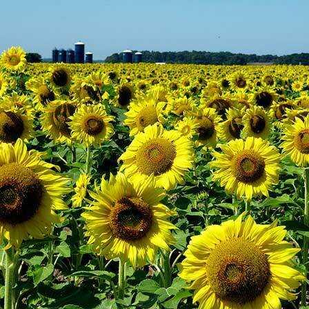 Top 25 najkrajšie žlté kvety