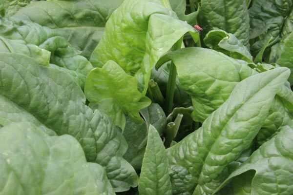 Top 10 potravín bohatých na fosfor