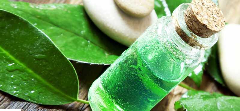 28 úžasné výhody čaju Tree oil pre pokožku, vlasy a zdravie