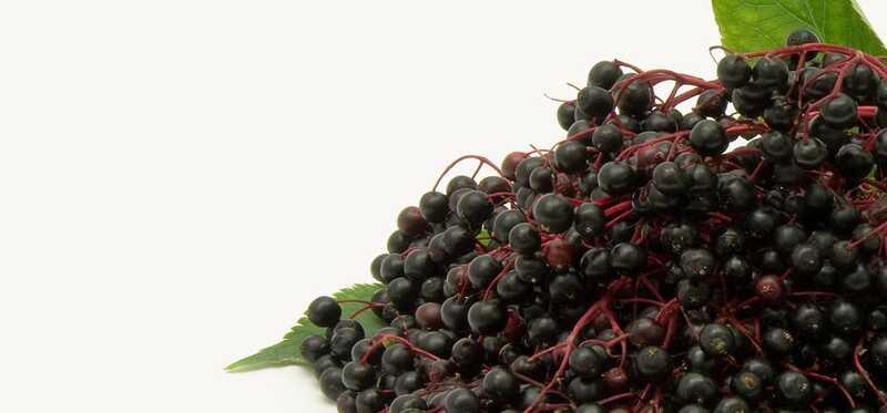 5 úžasné zdravotné prínosy Elderberries