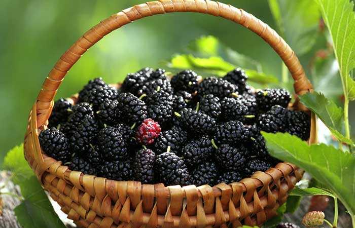 6 neočakávaných vedľajších účinkov Mulberry