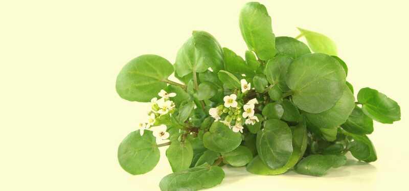 32 úžasných prínosov žerucha (Jal Kumbhi) pre pokožku, vlasy a zdravie