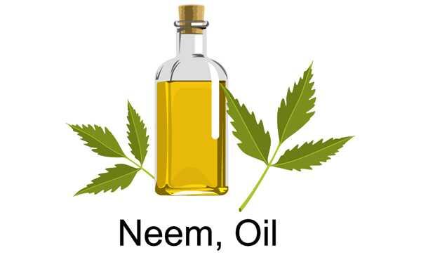 10 spôsobov, ako môže olej Neem znížiť lupiny