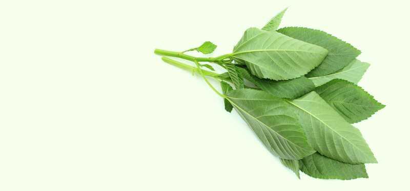 10 úžasné zdravotné prínosy molokí