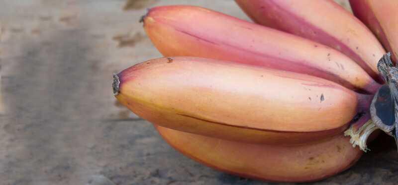 15 nuostabių raudonų bananų naudos sveikatai