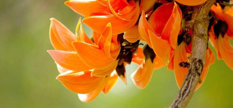 20 kõige ilusamat lilli, mis on tavaliselt saadaval