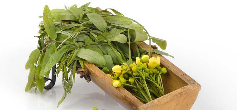 13 manfaat luar biasa dan penggunaan tanaman senna