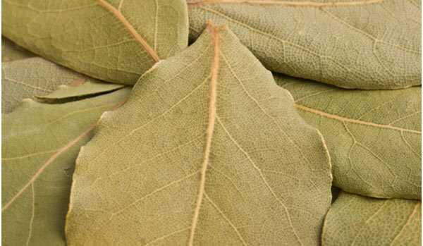 17 beste voordelen van Bay Leaf (Tej Patta) voor huid, haar en gezondheid