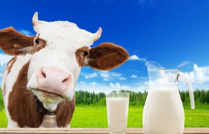 Výhody kravského mlieka podľa Ayurvedy