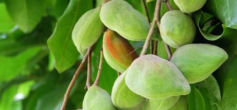 10 bedste fordele ved Kakadu Plum til hud, hår og sundhed