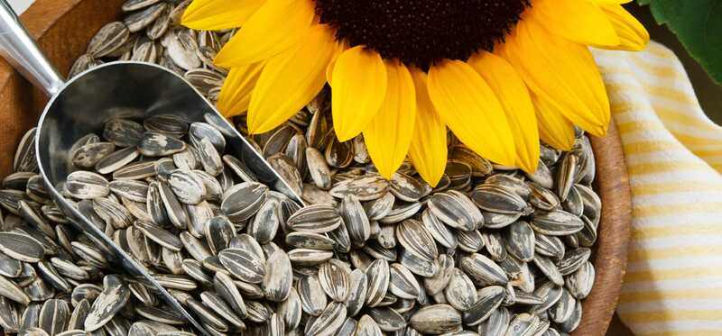 34 geweldige voordelen van zonnebloempitten (Surajmukhi Ke Beej) voor huid, haar en gezondheid