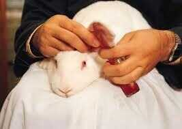 an overview of cosmetic testing on animals and controversies surrounding it